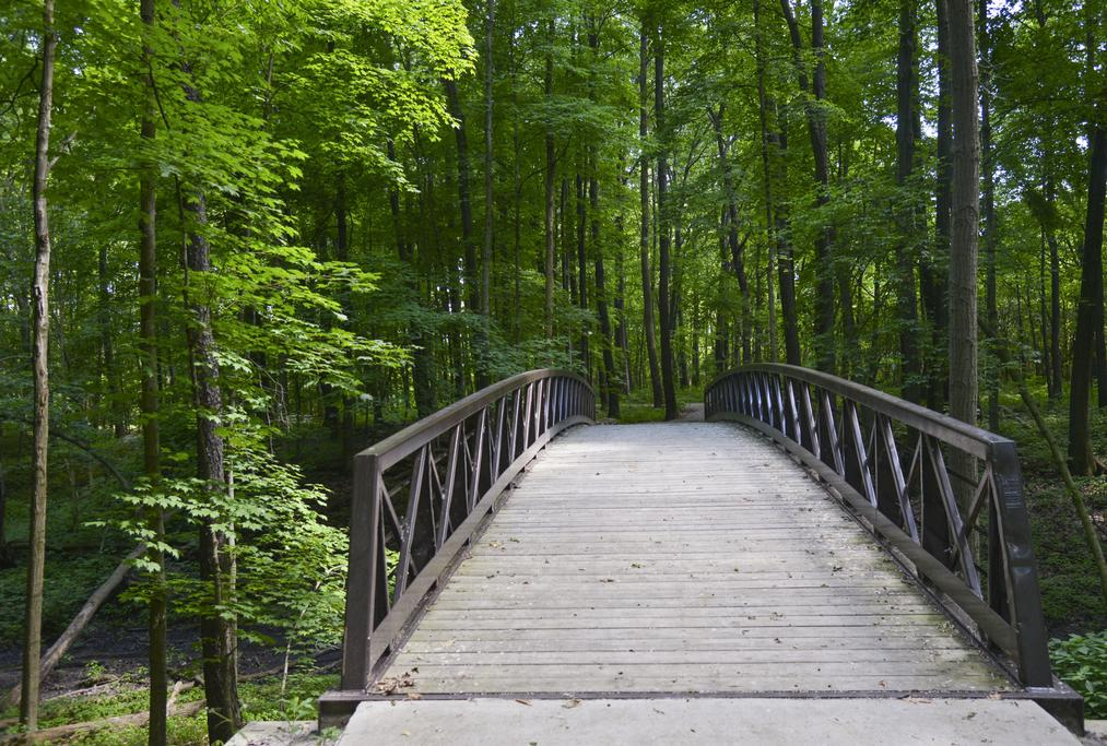 Wooden bridge in the lush forest at Fallen Timbers Battlefield in Toledo Metroparks.